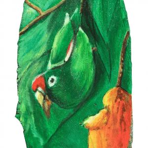 Perico comiendo Mango